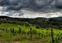 settore vinicolo agenti di commercio